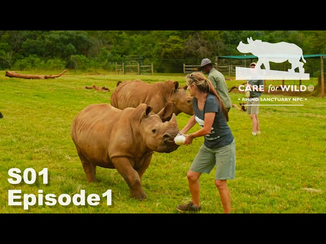 Weighing Baby Rhinos and Health Checks | S01 Episode 1