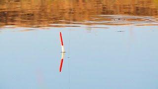 Рыбалка на удочку в сентябре Крупная плотва на поплавок