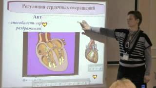 Клеточное строение организма, клетки, сердце