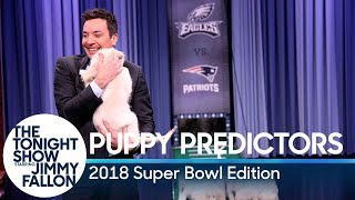 Puppies Predict the Winner of Super Bowl LII
