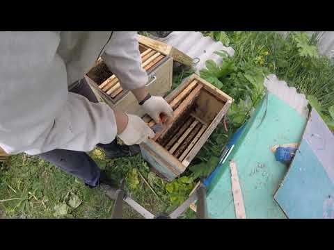 Пересадка роя в улей 2019г. Beekeeping For Beginners