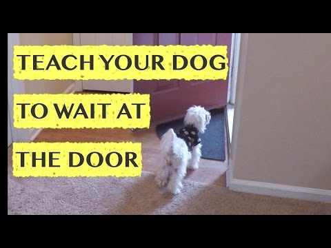 Teach Your Dog to Wait at the Door