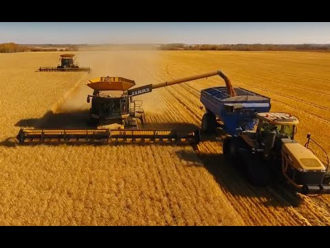 Claas Lexion 780's in Wheat 2017