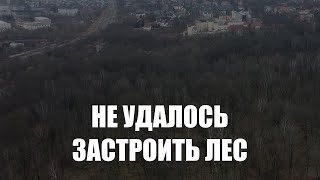Власти хотят расторгнуть с инвестором договор аренды леса на улице Донского в Калининграде