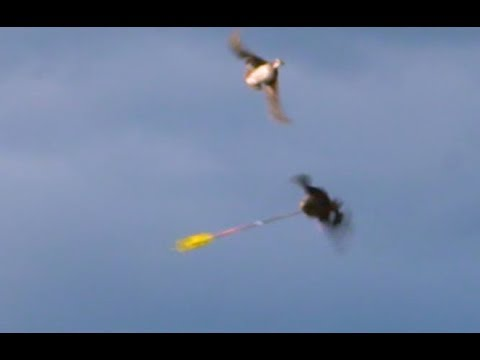Arrows And Fast Flying Ducks!!! Kill After Kill!