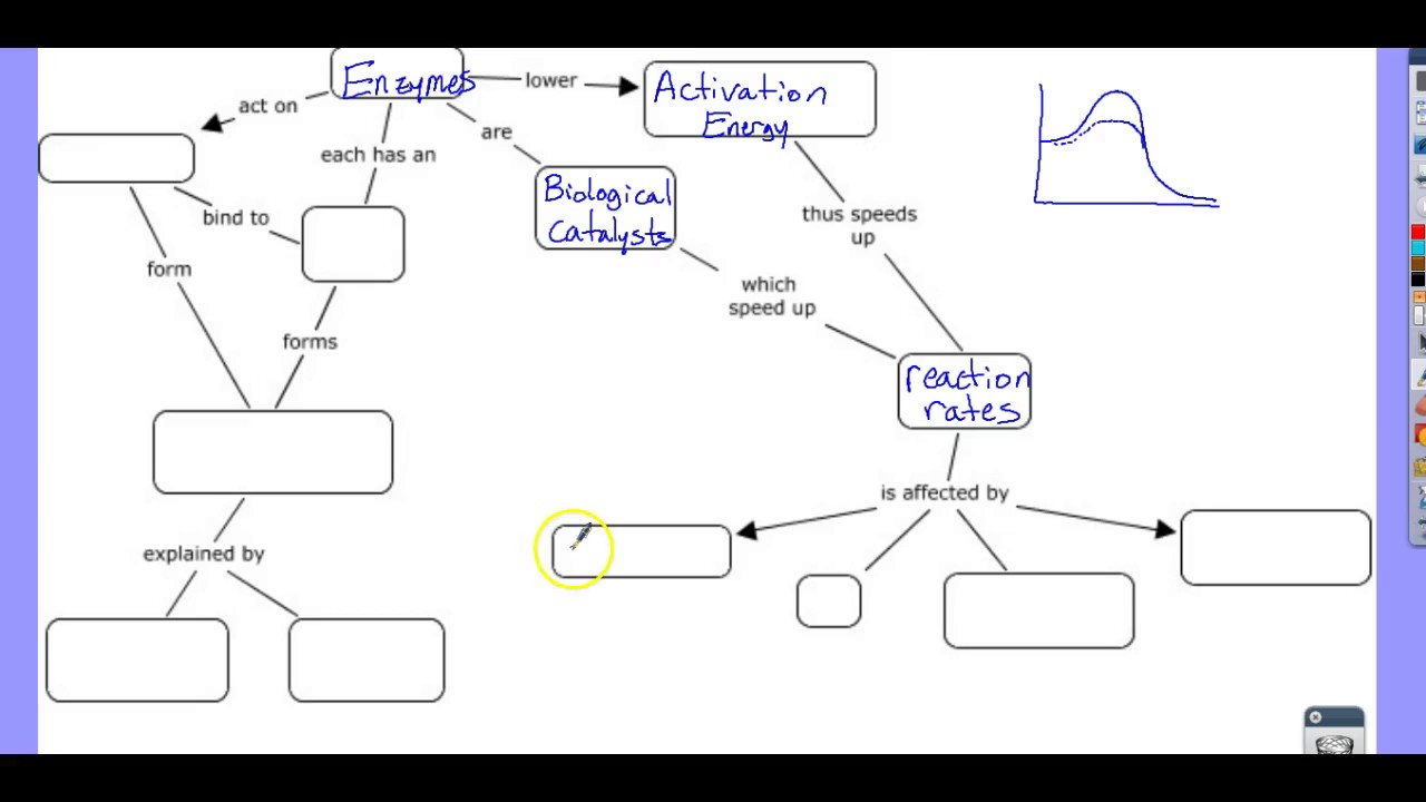 Enzyme Concept Map   YouTube