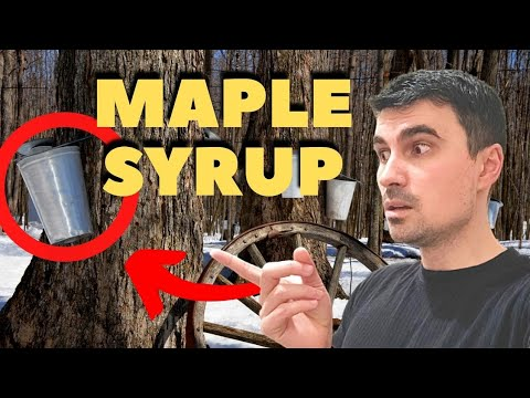 Sugar Shack, Canada | how to collect maple syrup from trees