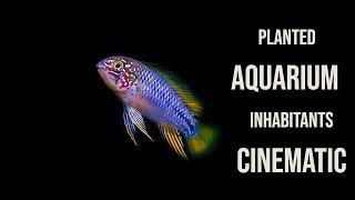 PLANTED AQUARIUM FISH and INVERTEBRATES   CINEMATIC MACRO FILM Version