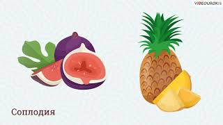 Учителю биологии. Видеоурок «Плоды и семена»