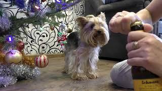 Реакция собаки на пиво