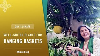 Dry Climate | Well-suited plants for Hanging Baskets | कम नमी में उगाएं ये पौधे