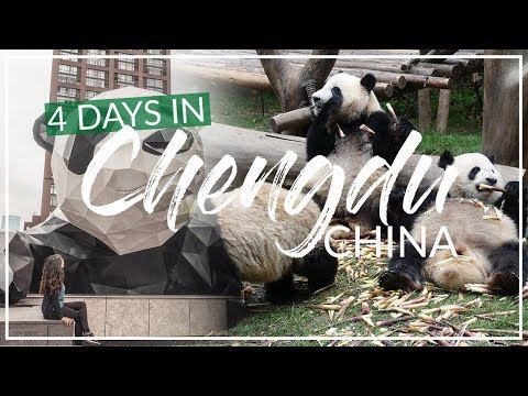 Best City in CHINA | Chengdu TOP Tourist Attractions 成都大熊猫