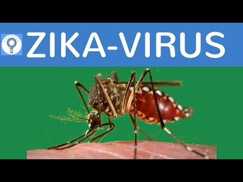 Zika-Virus einfach erklärt - Entwicklung, Übertragung, Symptome, Folgen, Heilmittel