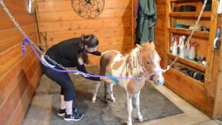 How to clean a mini-horse