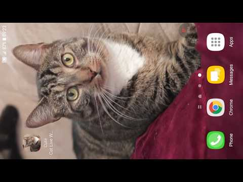 Cute Cat Live Wallpaper Apps On Google Play