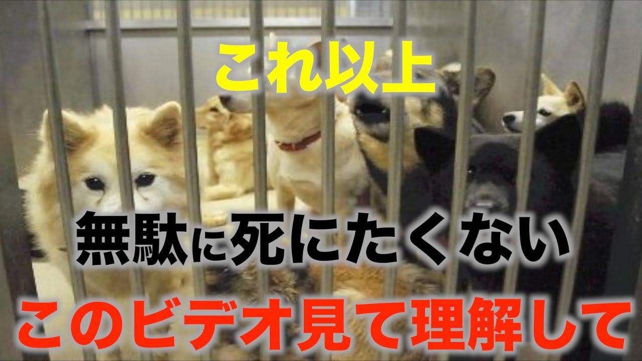 はじめて犬を飼う前に観る動画 犬の殺処分が起きるサイクル これをシェア拡散すれば必ず減ります!協力してください!1