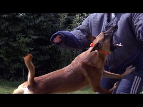 Dog Attack Training in Slow Motion