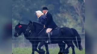 Красивые фото лошадей с интернета )))