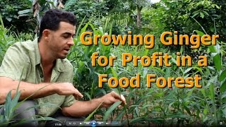 How to Grow Ginger for Profit in a Food Forest