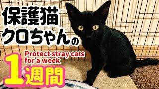 【保護猫】子猫のクロちゃんの1週間 Protect stray cats for a week