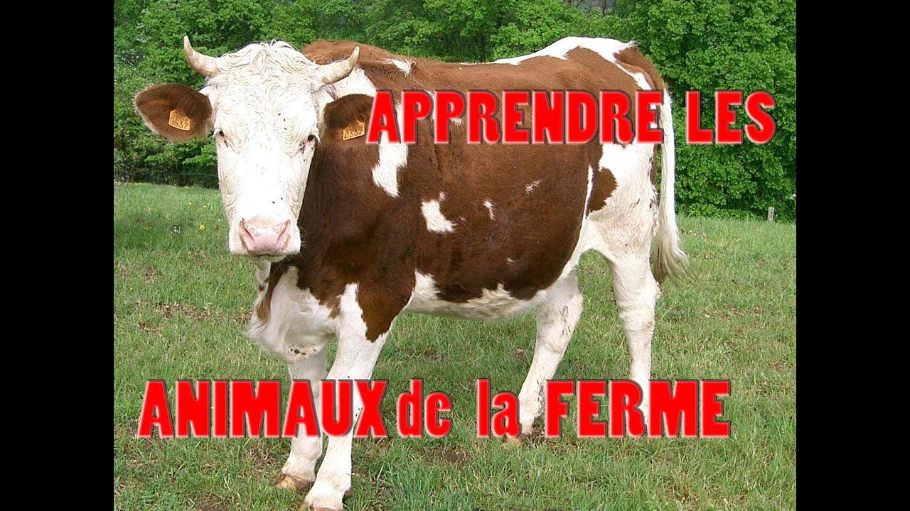Apprendre les sons d 39 animaux de la ferme et leurs cris - Images d animaux de la ferme ...