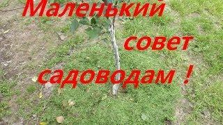 Мульча из газонной травы(, 2014-06-07T20:39:16.000Z)