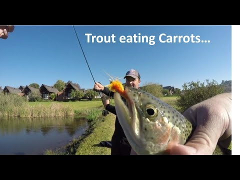 How NOT To Handle Trout... South African Trout Fly Fishing