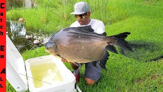 CATCHING Wild GIANT PACU FISH with MASSIVE NET!