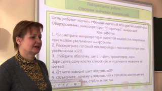 Мастер-класс Соколовой И Ю Разработка урока «Зеленые водоросли»
