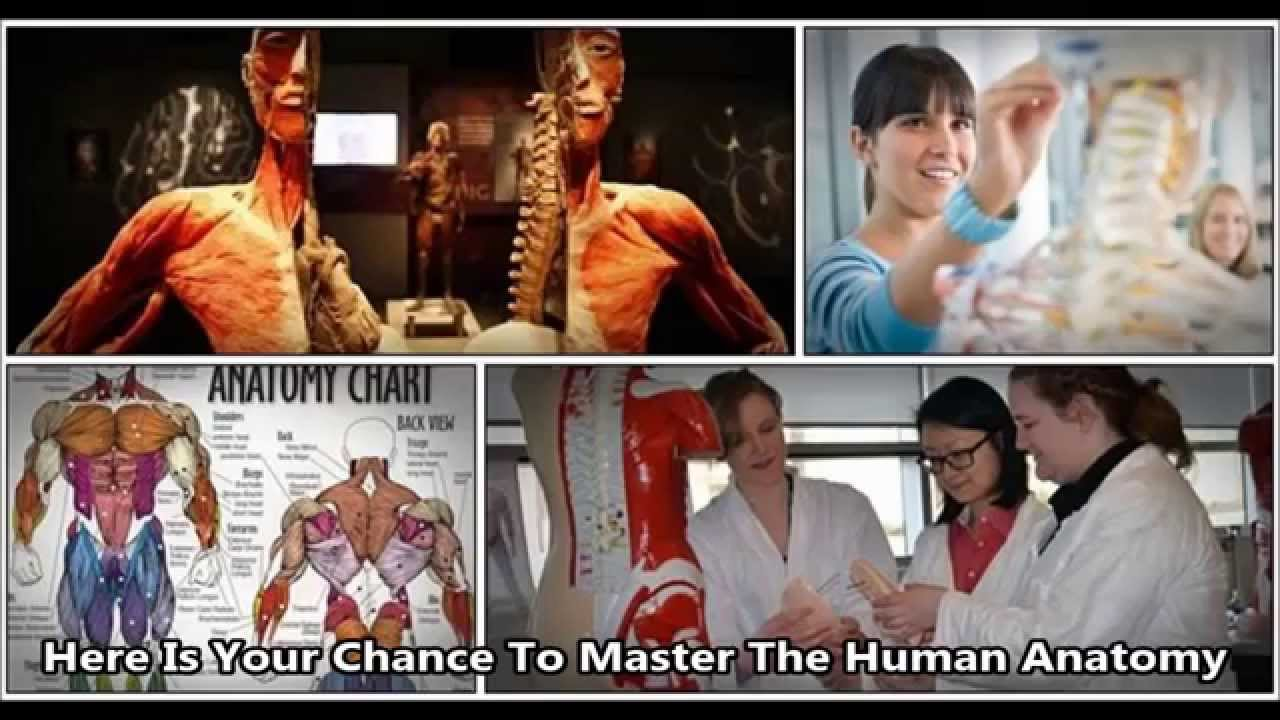 Online Human Anatomy Course - YouTube