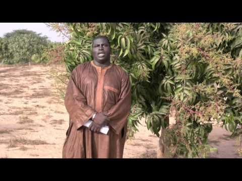 Meet Nature & More grower Pathé Dia from Senegal!