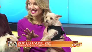 This Week's Picks Of The Litter: Elvis and Charlie
