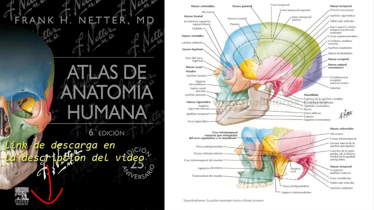 Atlas De Anatomia Humana 6a Edicion Netter