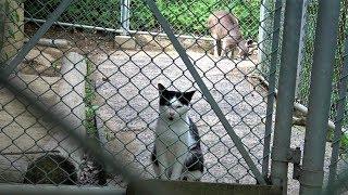 2018年6月9日  。 カンガルーの群れが集う柵の中で、可愛く寛ぐ白黒のハ...