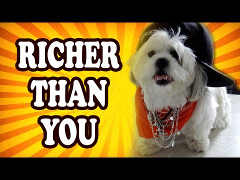 Top 10 People Whose Dogs Inherited a Fortune