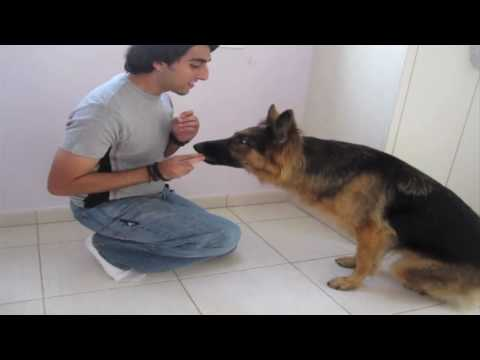 "dog-trick-tutorial:-""cover-your-eyes!!"""