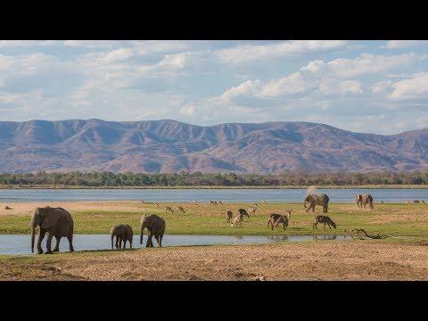 The Safari Experience In Zambia