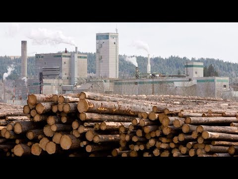 New mill opening after years of forestry decline in Vancouver Island