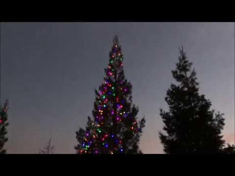 Hanging Christmas Lights on a Tall Tree