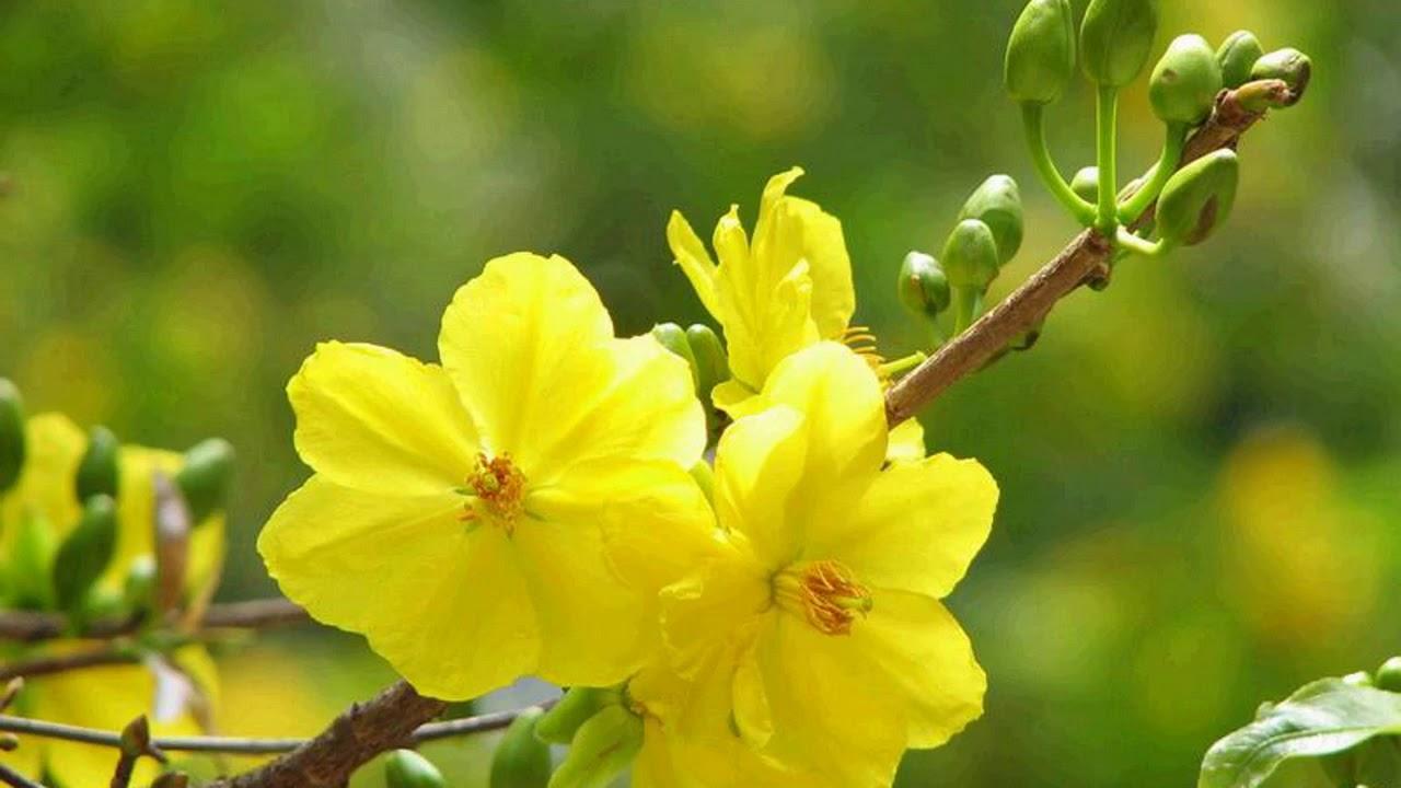 Tân cổ – Thương em nhiều qua lá thư Xuân – Soạn giả Ngô Hồng Khanh – Trình bày Mình Trí