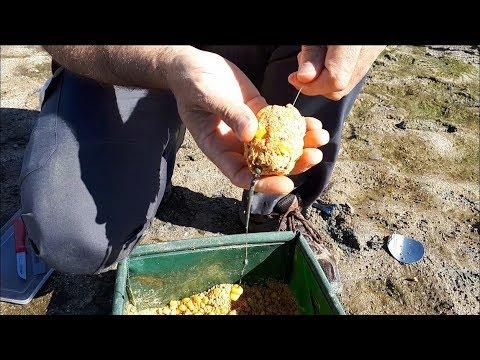 Pesca de carpa con cebador plomado