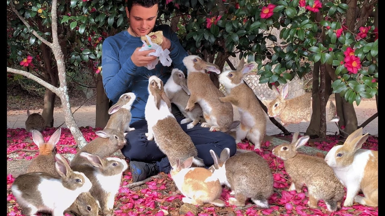 Exclusive Tour of Rabbit Island Japan by a Bunny Expert
