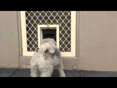 2 Dog Doors Installed Into A Timber And Security Door By Pet Doors