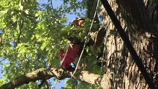 Cat stuck in tree for three days rescued