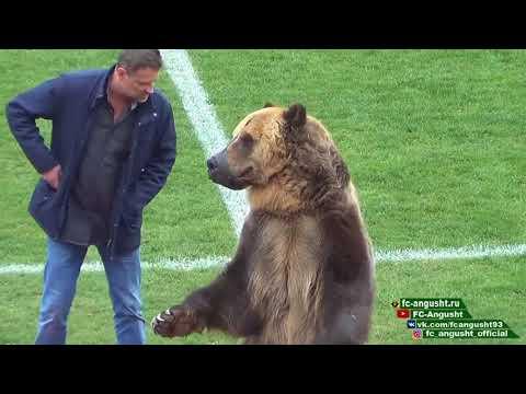 """""""Medve a pályán"""" - mindeközben biszem-b@szoméknál!"""