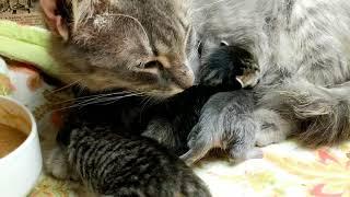 Kitten close up 2018-07-21