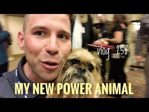 MY NEW POWER ANIMAL vlog 258