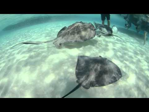Cayman Attractions by Lia Piper Final