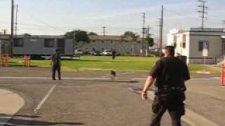 so you think you can outrun a police dog