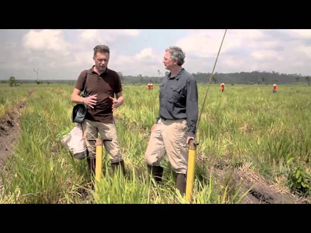 How Do You Plant a Rainforest?
